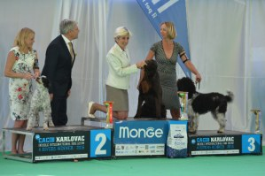 Pepsi 3rd place in FCI group 8 at CACIB Karlovac