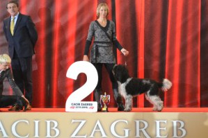 Pepsi 2nd place in working/hunting dogs at CACIB Zagreb