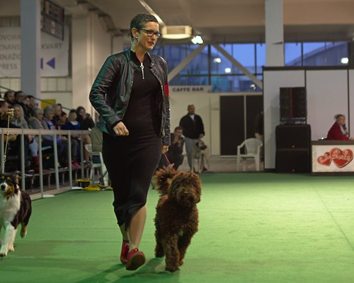 Faye at the Winter Winner Dog Show in Zagreb